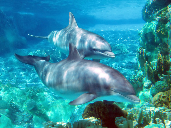 Swim with the Dolphins